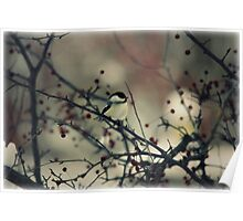 Chickadee in berry tree Poster