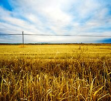 Wheat fields by carloscastilla