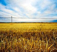 Wheat fields by carloscastilla