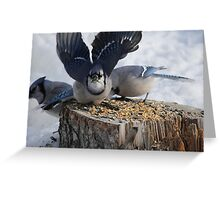 Blue Jays feeding time Greeting Card