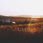 Cornfield sunset in Milos by wichwetyl