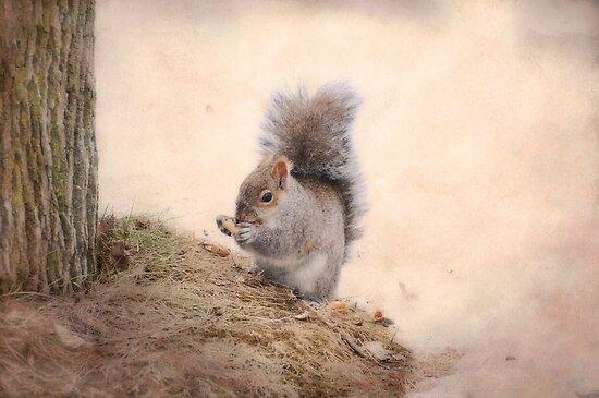 Squirrel-cuteness overload by KathleenRinker