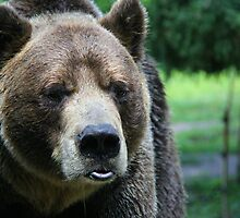GRRRR Grizzly by JacalynE