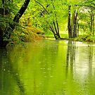 Spring Rain by NatureGreeting Cards ©ccwri