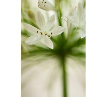 Soft Agapanthus Photographic Print