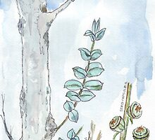 Eucalyptus and gum seeds - a fresh start - Botanical by Maree Clarkson