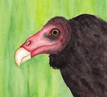 Turkey Vulture  by shaylyngordon