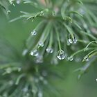 Hanging Drops. by Elisabeth Thorn