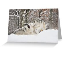 I'm not afraid of the big bad wolf... Greeting Card