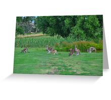 Australian Bush Kangaroo Greeting Card