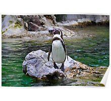 Penguin on Rock Poster