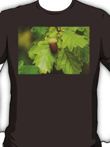 Fruit of an Oak tree ripe in autumn T-Shirt
