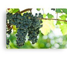 Ripe red wine grapes  Metal Print