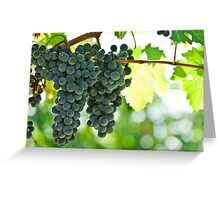 Ripe red wine grapes  Greeting Card
