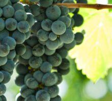 Ripe red wine grapes  Sticker