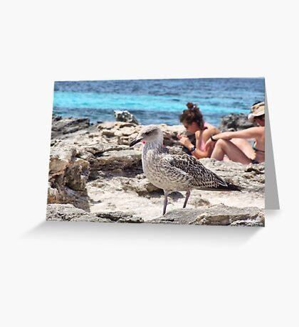 Bird on the beach Greeting Card
