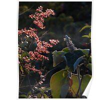 sierra's nature IV - naturaleza de la sierra Poster