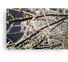 After the Ice Storm in Colors Metal Print