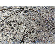Winter Freezing Photographic Print
