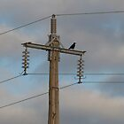 Crow & Cables by Robert Carr