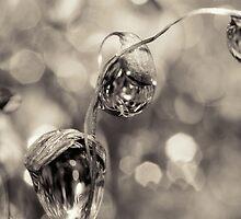 Moss Drops in B&W by Sharon Johnstone