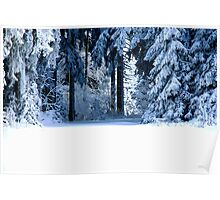 Snowy Black Forest 4 Poster