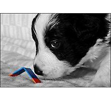 Agility Pup Photographic Print