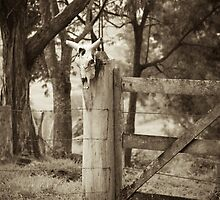Bull skull and fence by Flavio Coelho