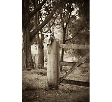 Bull skull and fence Photographic Print