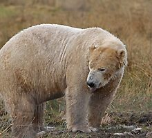 Highland Wild life Park  by Keith Larby