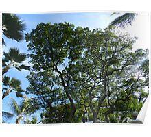 tree, sun and treason Poster