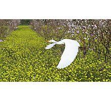 Spring flight Photographic Print