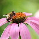 Mr. Busy Bee by AbigailJoy