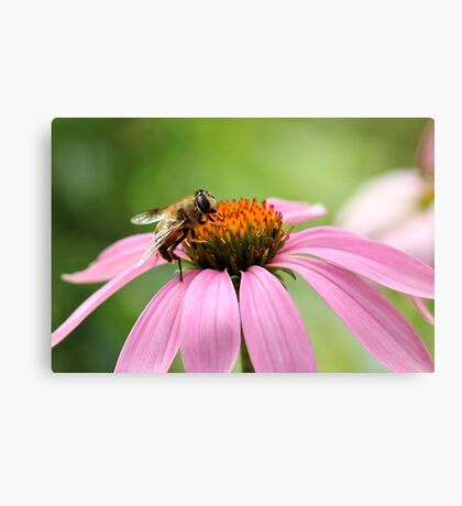Mr. Busy Bee Canvas Print