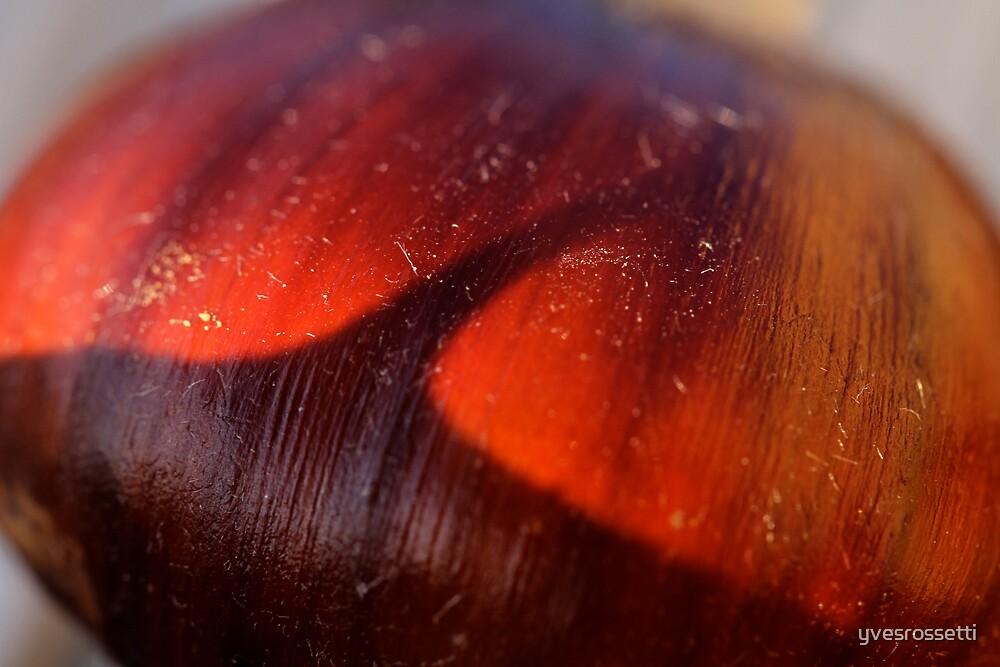 chestnut dream by yvesrossetti