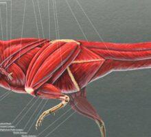 Carnotaurus Muscle Study Sticker