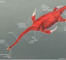 Elasmosaurus Muscle Study by Thedragonofdoom