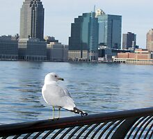 I Can See New Jersey by joan warburton