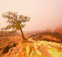 Foggy Garden of the Gods Morning by RondaKimbrow