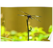 Poised For Flight - Dragonfly Poster