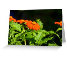 Mexican Sunflower Greeting Card