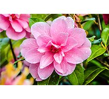 After The Rain - Pink Flower Photographic Print