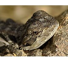 Little Lizard in the Garden Photographic Print