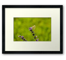 Small White Butterfly On Lavender Framed Print