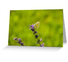 Small White Butterfly On Lavender Greeting Card