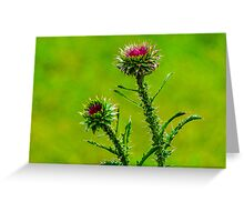 Budding Thistle Greeting Card