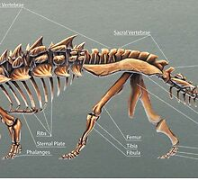 Gastonia Burgei Skeletal Study by Thedragonofdoom