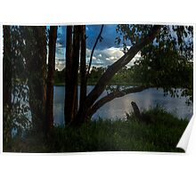The view between the trees Poster