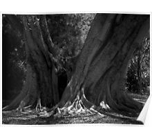 Scary Tree- Pine In The Botanic Gardens Poster
