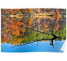 Branch Protrudes from Autumn Lake Poster